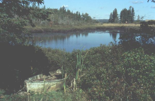 oakisland-swamp